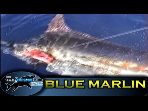 Blue Marlin - Ep.6 - Out of the Blue - Vintage Series - Totally Awesome Fishing