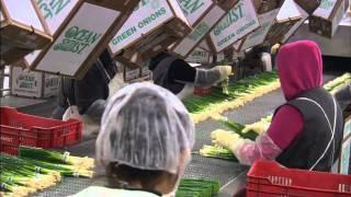Ocean MIst Farms Expands Baja Mist Facility in Mexicali Mexico