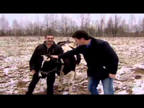 Russia goes organic Video CNN