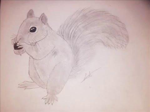 Apprendre dessiner un cureuil d butant youtube - Ecureuil a dessiner ...