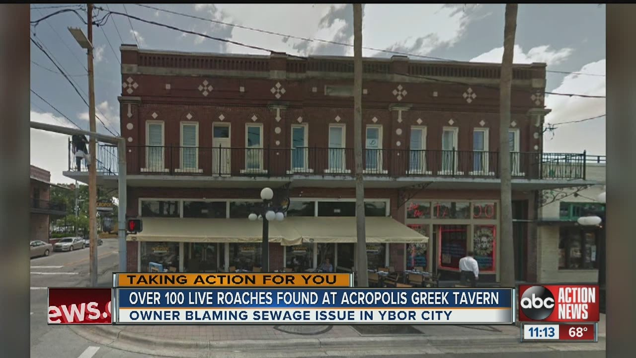 Dirty Dining: Acropolis Greek Taverna temporarily closes with 100 live &  dead roaches in the kitchen