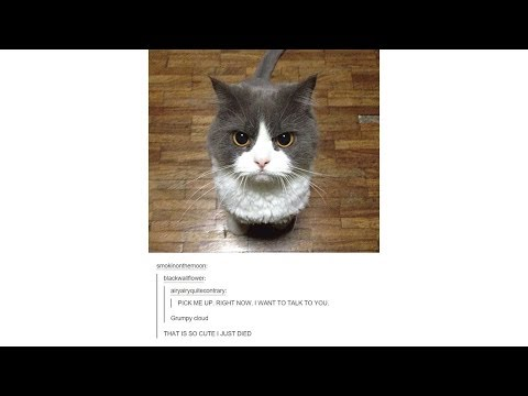 Tumblr Posts - Episode 17