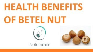 betel nut amazing health benefits and side effects complete research || Nuturemite English