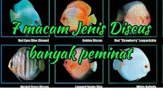 7 macam ikan Discus yang paling banyak peminat