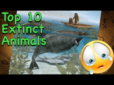 Top 10 Animals that Humans made Extinct Because of over Hunting  A very heart breaking video