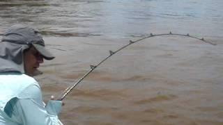 Maior peixe pintado do Pantanal