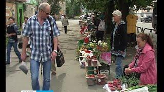 видео Купить малину замороженную оптом и в розницу в Москве