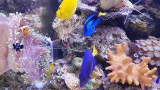 Acquario marino 600 litri di Daniele Petrillo
