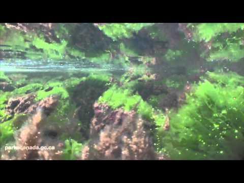 Gwaii Haanas Marine -- Journey from mountain top to sea floor