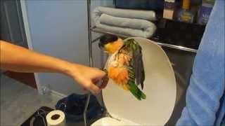Zoe the Parrot Toilet Training