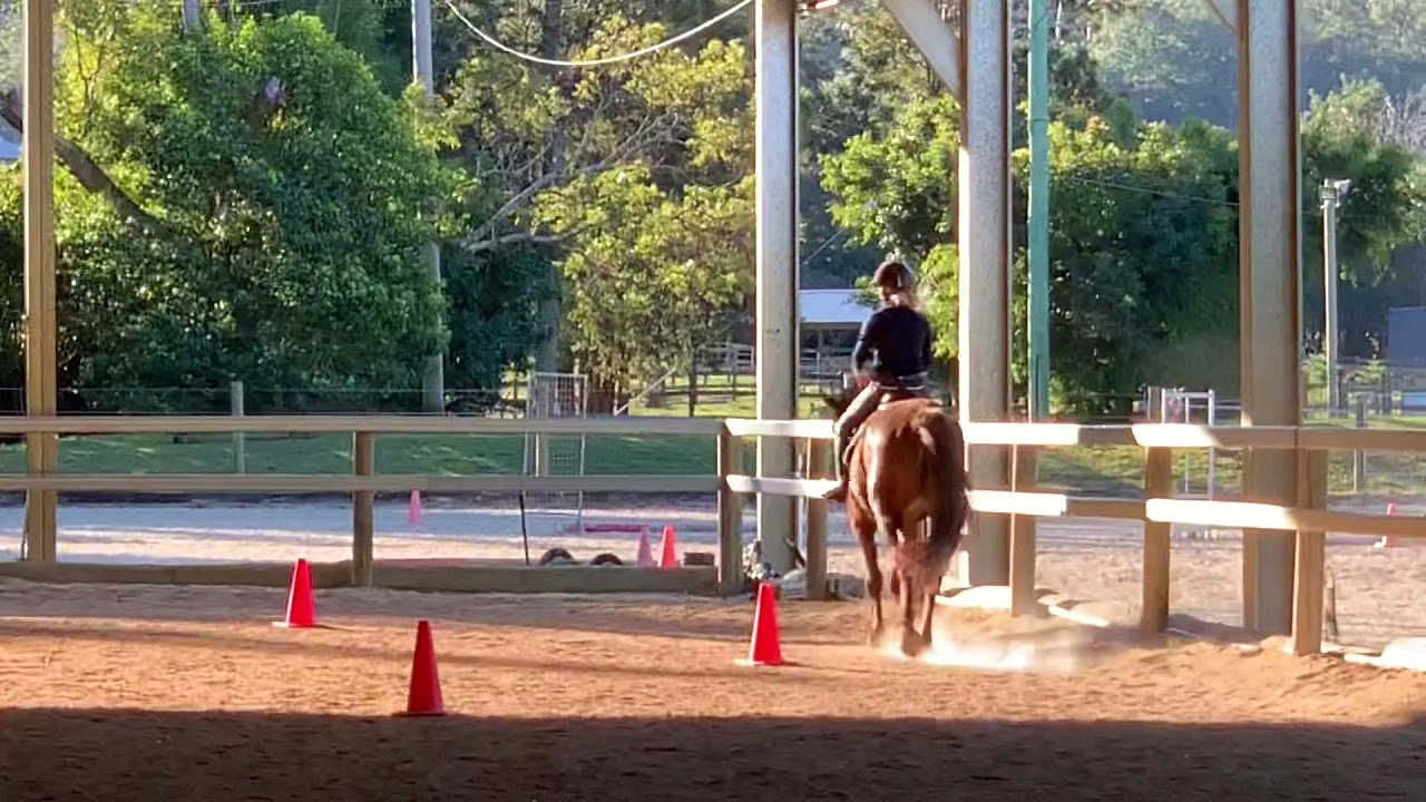 FOR SALE Savvy WB mare Dressage video