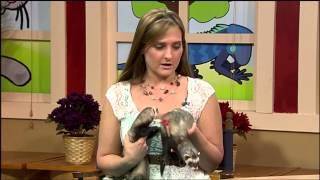 Pet Owners Hotline: Ferrets