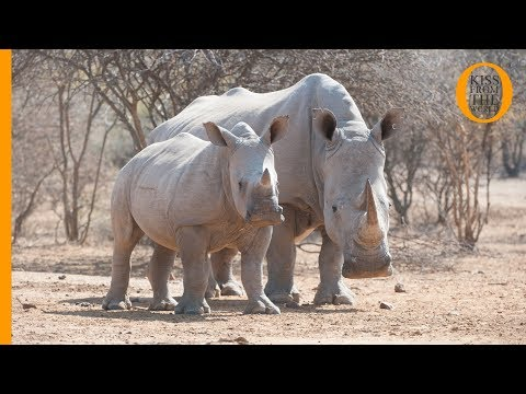 Botswana Safari: wild animals at Khama Rhino Sanctuary