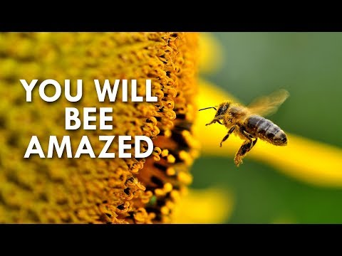 The Amazing World of Bees