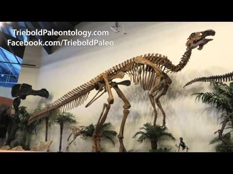 Edmontosaurus annectens - Triebold Paleontology