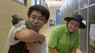 Австралийцев призывают не выбрасывать котят (новости)