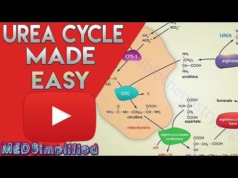 Urea Cycle Made Simple - Biochemistry Video