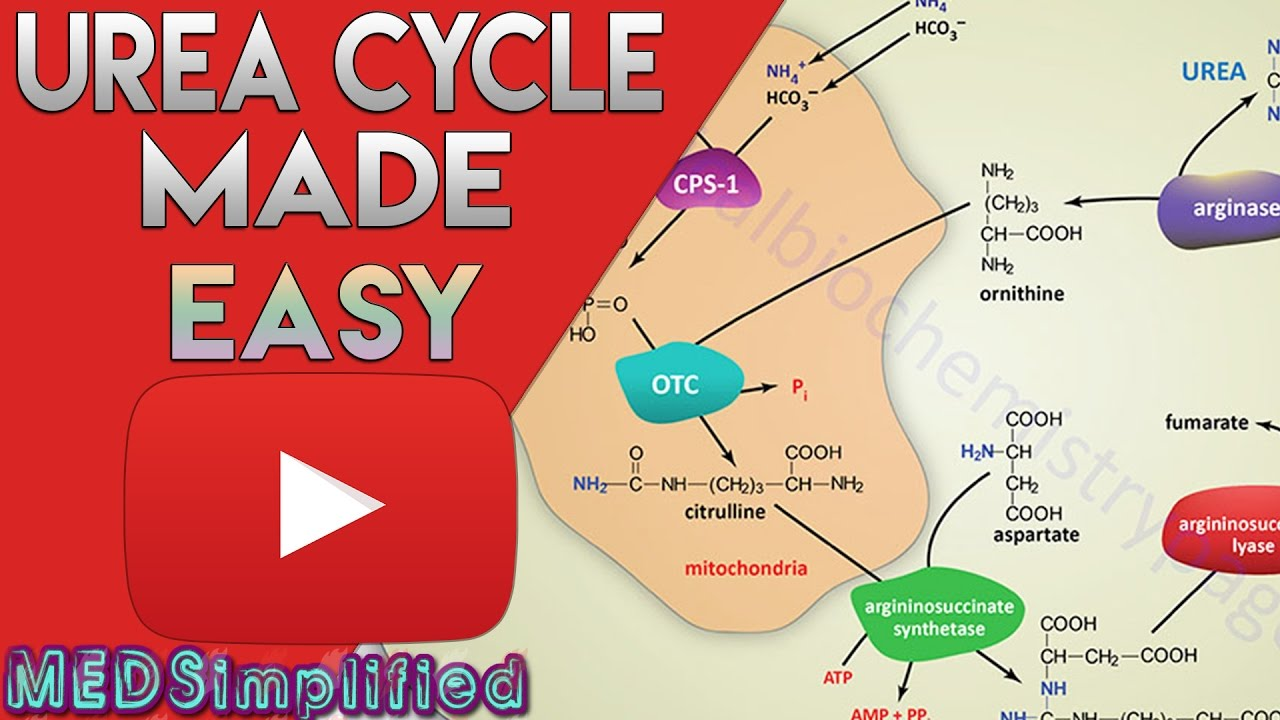 hight resolution of simple metabolic diagram