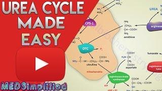 Urea Cycle Made Simple