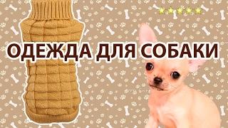 Свитер для собаки - обзор одежды для домашних питомцев