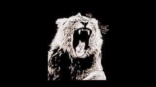 Martin Garrix & Botnek & 3LAU - Vikings Animals (Dj MaJa & Chupwell Mashup)