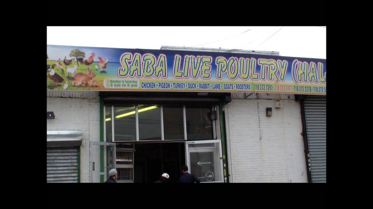 Halal Live Oakland Ca Saba Poultry Wwwmiifotoscom