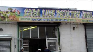 Live Goats for sale in Canarsie Brooklyn