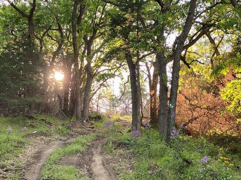 LAND FOR SALE! 98 Acres +/- Knox County, Nebraska