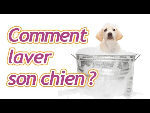comment laver son chien youtube. Black Bedroom Furniture Sets. Home Design Ideas