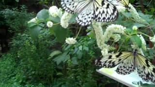 Butterfly Farm Sentosa Island