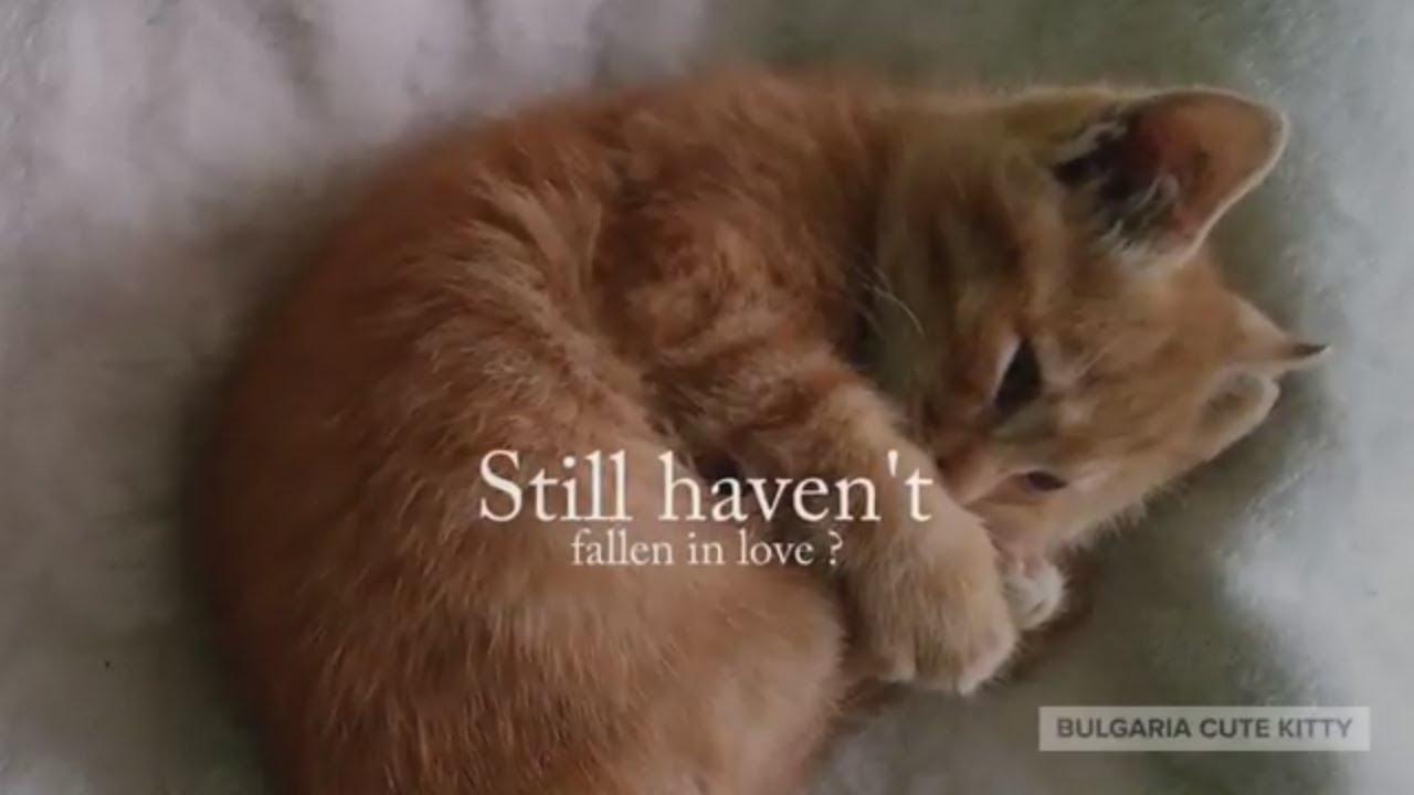 Bulgaria Cute Kitty Bulgarian Cute Cat Animal Shelter