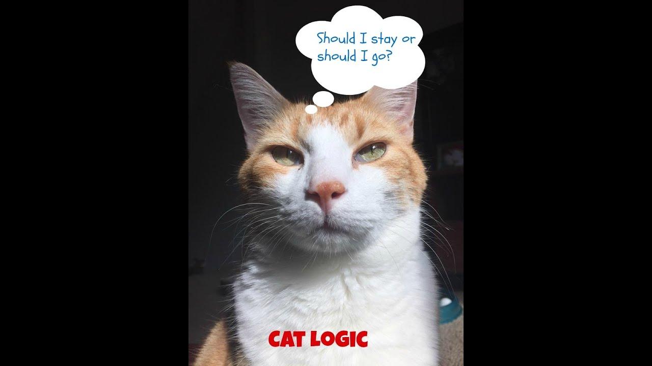 Youtube Cat Eye Tutorial: Cat Logic