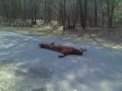 Sasquatch Is Dead Youtube