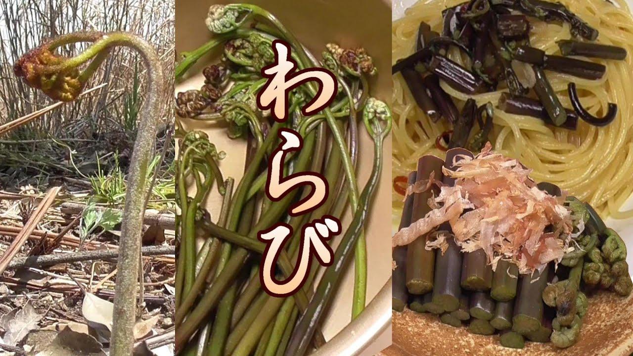 の 方 蕨 食べ