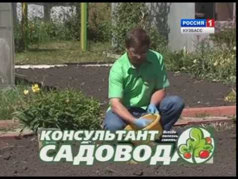 Консультант садовода за 08 06 2016