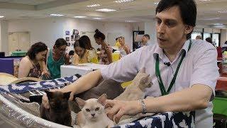 Международная выставка кошек (Тверь, 19.08.17)
