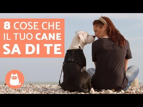 8 COSE che il tuo cane sa su di te – Curiosità sui cani