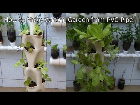 How to Make Vertical Garden from PVC Pipe Pvc Pipe Vertical Garden Designs on 2 liter bottle vertical garden, pvc vertical gardening for tomatoes, rebar vertical garden, pvc pipe garden watering, vertical earth garden, pvc pipe garden fence, a frame pvc pipe garden, pvc pipe in garden, idea outdoor planter vertical garden, pvc tube garden, pvc pipe garden tower, grow all vertical garden, pvc vegetable garden, copper vertical garden, wood vertical garden, homemade vertical garden, pvc pipe garden hoops, create a vertical garden, pvc pipe veg garden, pvc pipe herb garden,