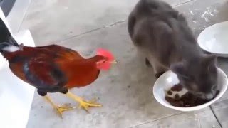 Cats vs other animals - Funny compilation