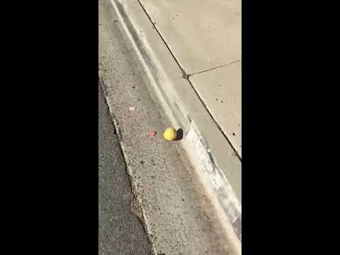 lemon rolling down the street twitter video
