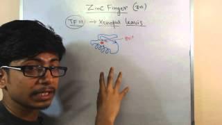 Zinc finger motif