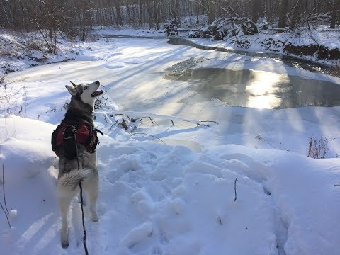 Year-round Adventures With Your Dog: Skijoring, Bikejoring, Canicross, & Icejoring!