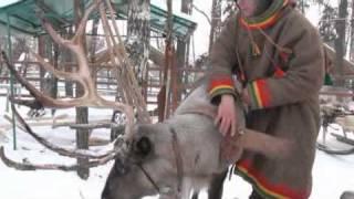 Сюжет про рога оленей черн.avi