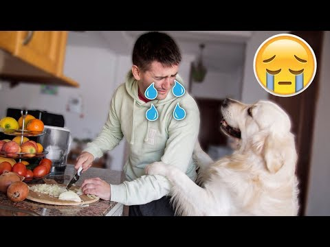 What Does My Dog Do When Onion Make Me Cry