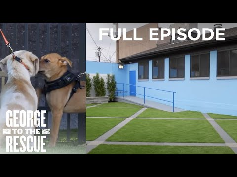 Renovation For Animal Shelter And Rescue Dogs | George To The Rescue