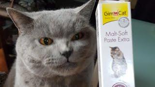 Британский кот линяет, как вывести шерсть из желудка)