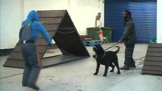 Rackars Terrier Training At Best 1 K9