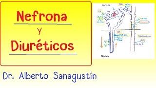 NEFRONA y DIURÉTICOS #nefrología