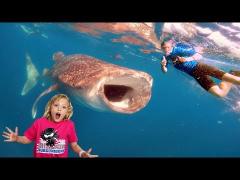Swimming In The Ocean With Whale Sharks And Manta Rays!