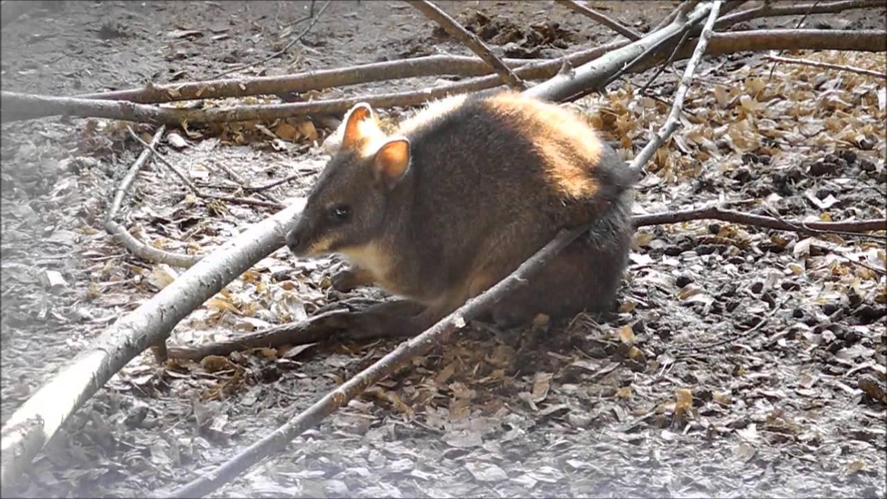 Wallaby Woods Donadea County Kildare YouTube